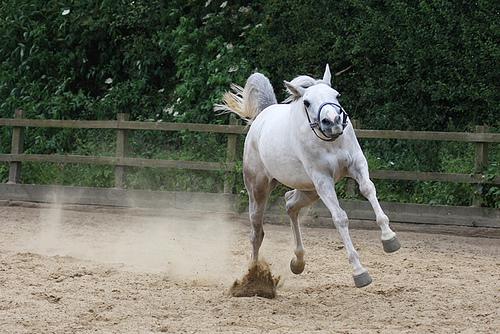 ダートで走る馬