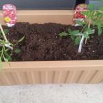 家庭菜園で第一次産業の価値を改めて知る