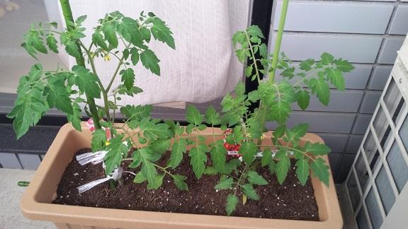 0503家庭菜園2