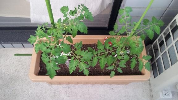 0503家庭菜園1