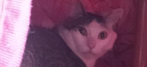 猫寝起きドッキリ6