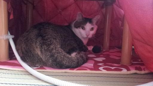 猫寝起きドッキリ7