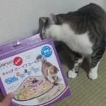 「キャッチ・ミー・イフ・ユー・キャン2 」は猫の運動に最適