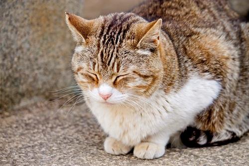 うたたねをする猫