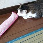 「ねこモテ またたびまくら」我が家のネコは遊んでくれませんでした