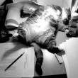 残業するネコ
