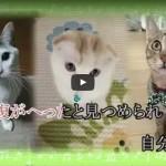 我が家のネコが「猫歌」に採用されました【猫歌プロジェクト】