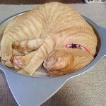 猫の暑さ対策に「ひんやりクール猫鍋」がオススメです