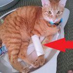 ネコがトイレットペーパーの芯で遊んでいました