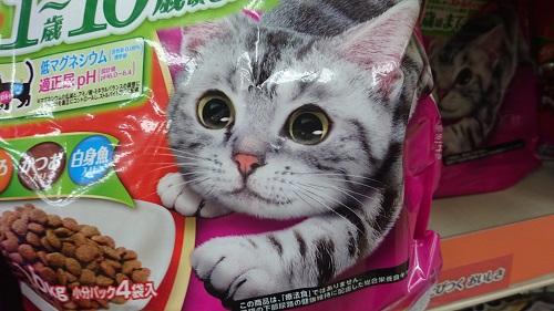 猫エサのパッケージねこ_4