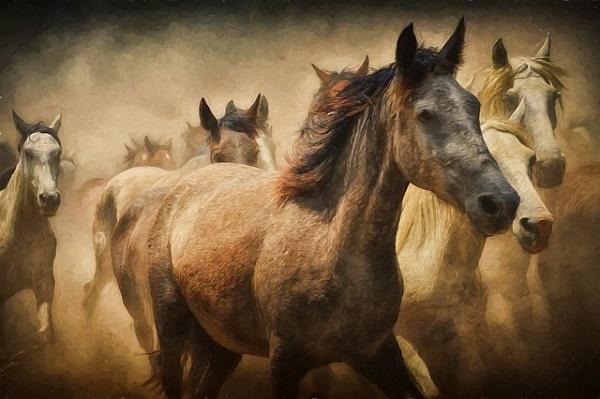 競争馬サラブレット