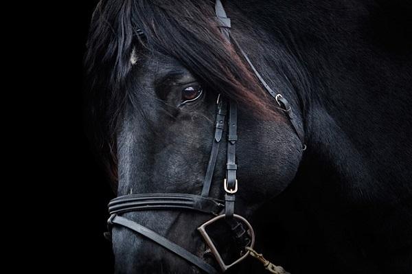 何度も好走する馬